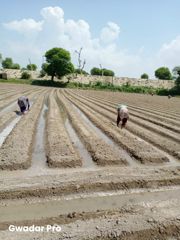 Soybean production in Pakistan may be spurred by high-yielding varieties from China