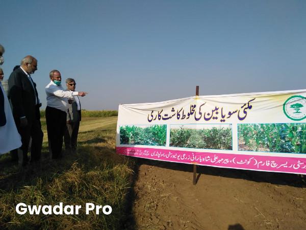 Punjab Agri Minister visits maize-soybean intercropping plot at Koont Farm