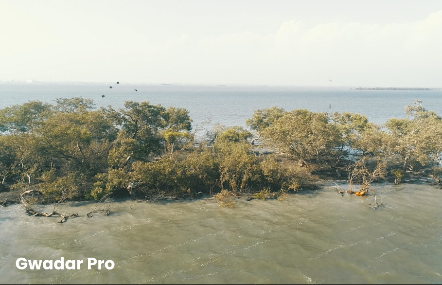 World Environment Day: Mangroves conservation put on agenda