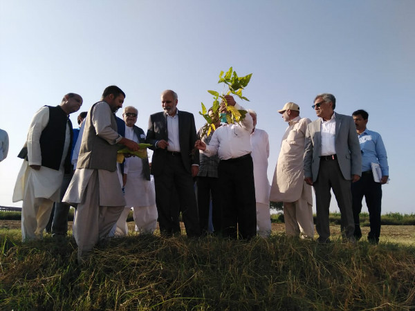 Maize-soybean strip intercropping tech, the best solution for revitalizing Pak soybean production