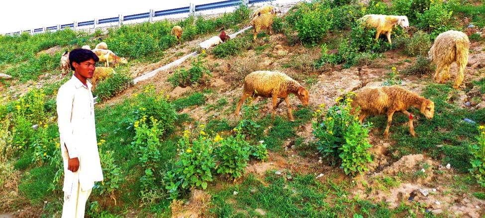 CPEC's M-14 to help boost livestock farming