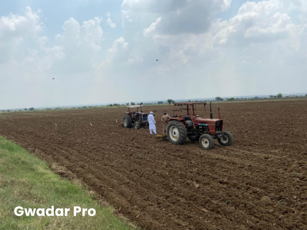 Sowing of maize & soybean under intercropping system for next season starts