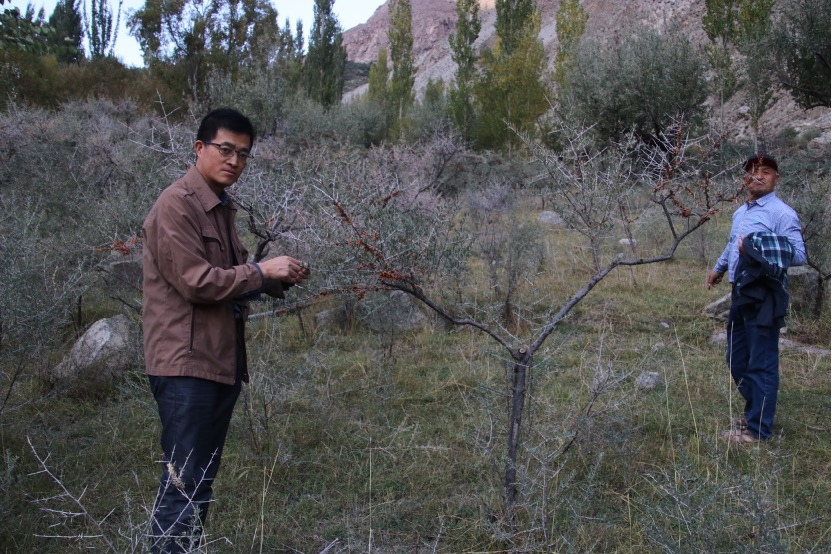 Chinese technologies to unleash health and wealth values of Pakistani medicinal plants